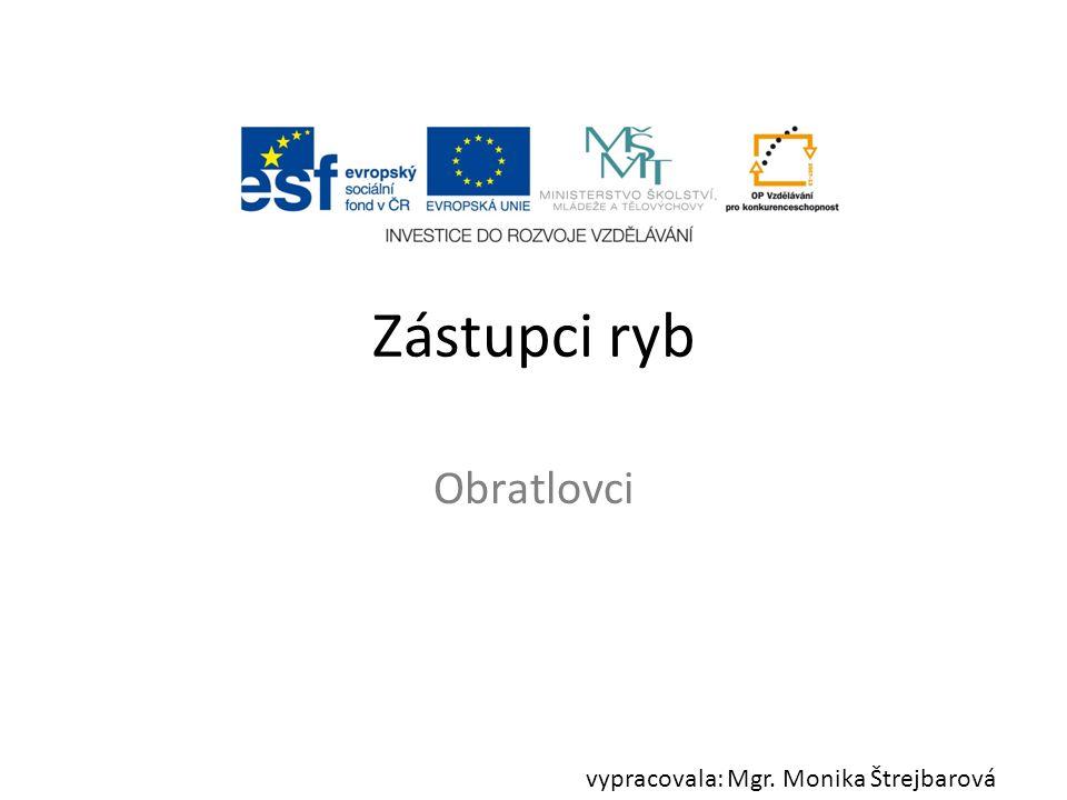 Zástupci ryb Obratlovci vypracovala: Mgr. Monika Štrejbarová
