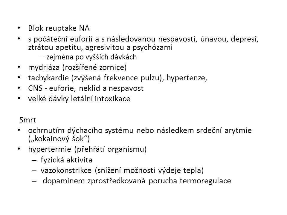 mydriáza (rozšířené zornice)
