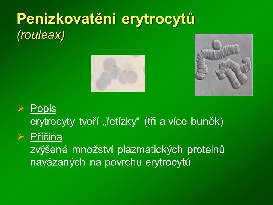 Penízkovatění erytrocytů (rouleax)