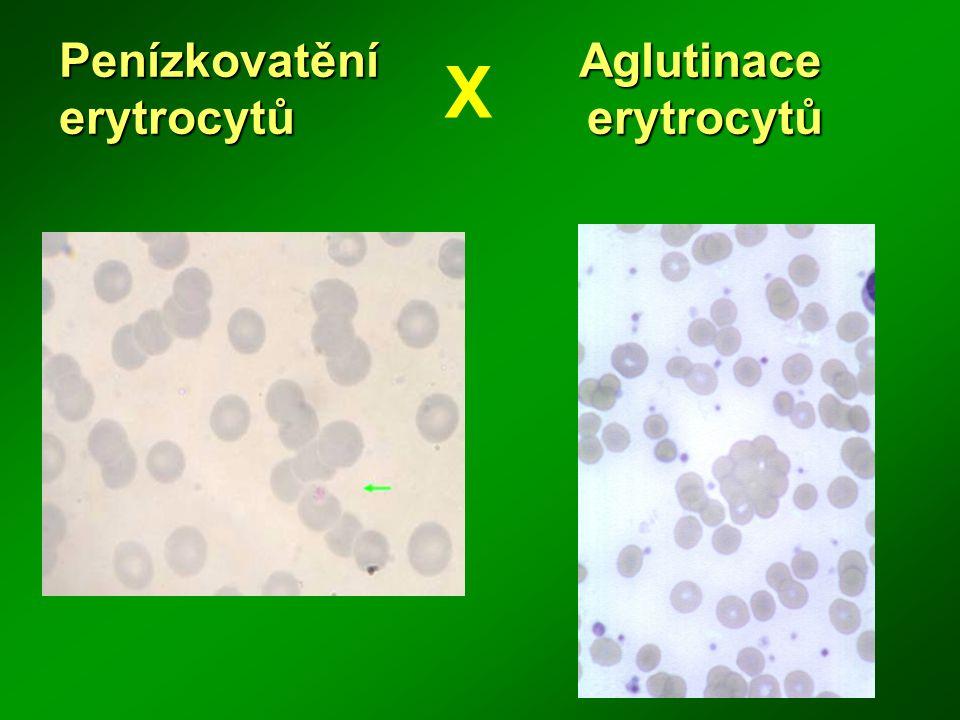 Penízkovatění Aglutinace erytrocytů erytrocytů