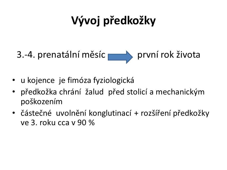 Vývoj předkožky 3.-4. prenatální měsíc první rok života
