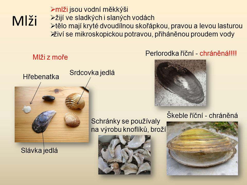 Mlži mlži jsou vodní měkkýši žijí ve sladkých i slaných vodách