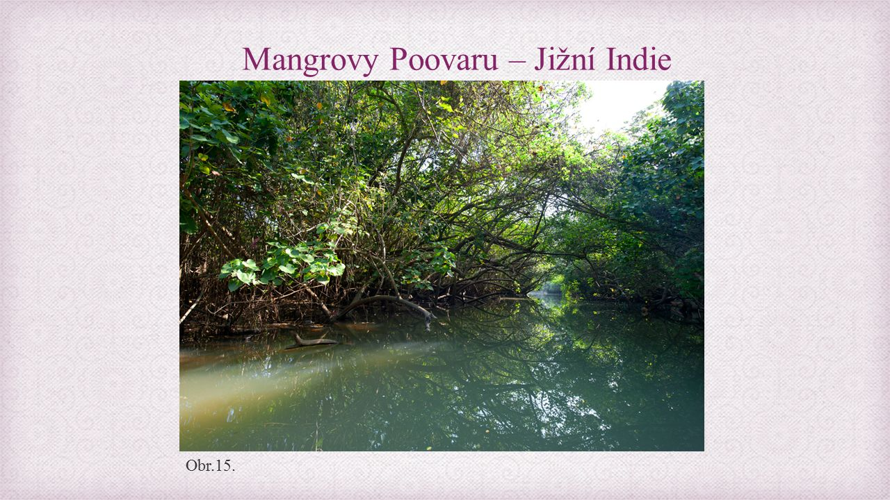 Mangrovy Poovaru – Jižní Indie