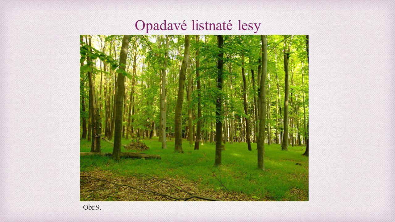 Opadavé listnaté lesy Obr.9.