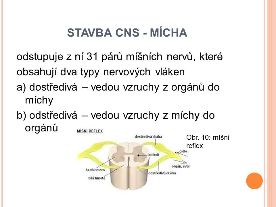 STAVBA CNS - MÍCHA odstupuje z ní 31 párů míšních nervů, které