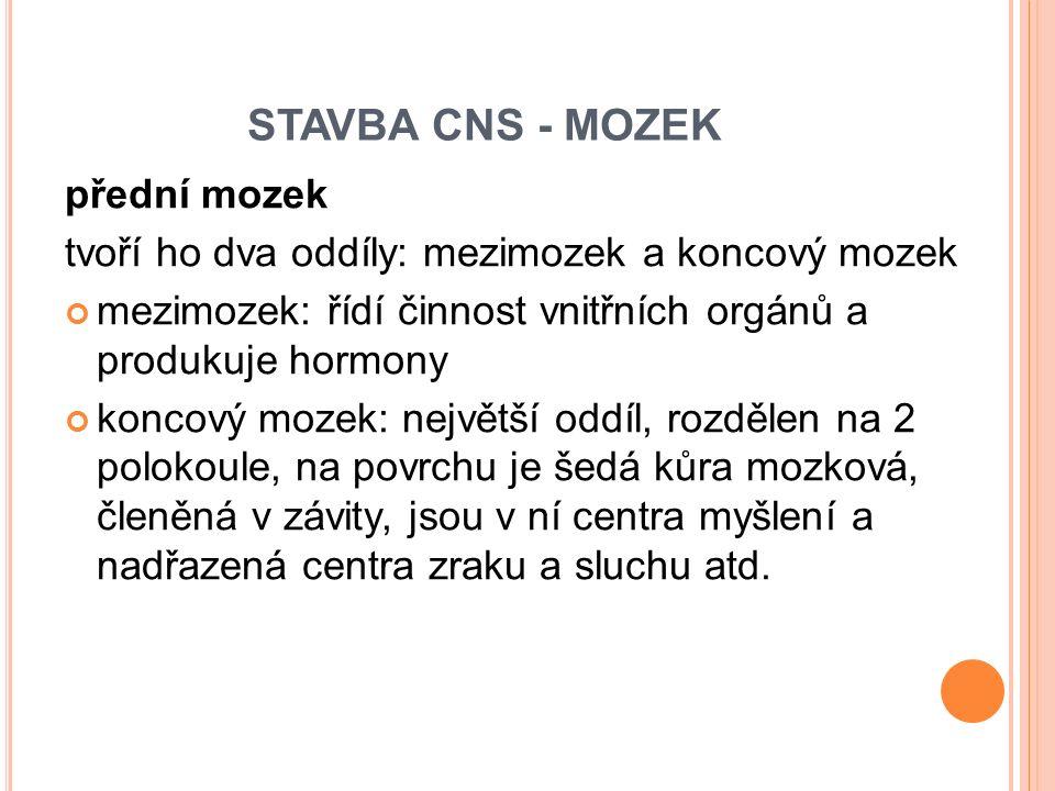 STAVBA CNS - MOZEK přední mozek