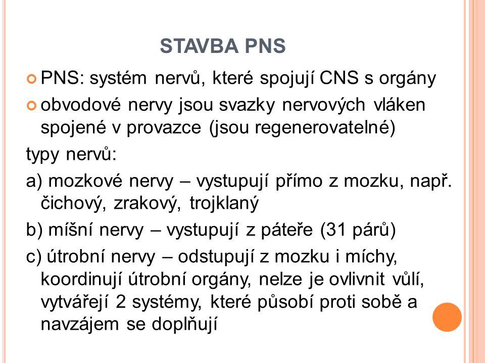 STAVBA PNS PNS: systém nervů, které spojují CNS s orgány