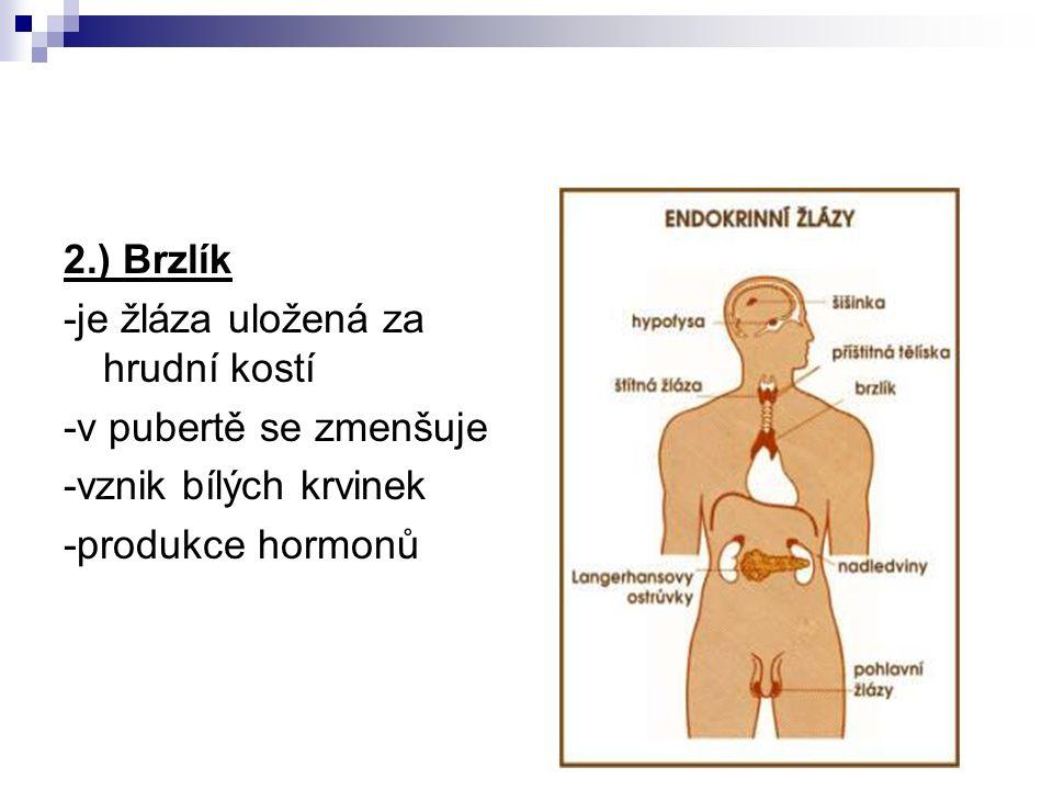 2.) Brzlík -je žláza uložená za hrudní kostí. -v pubertě se zmenšuje.