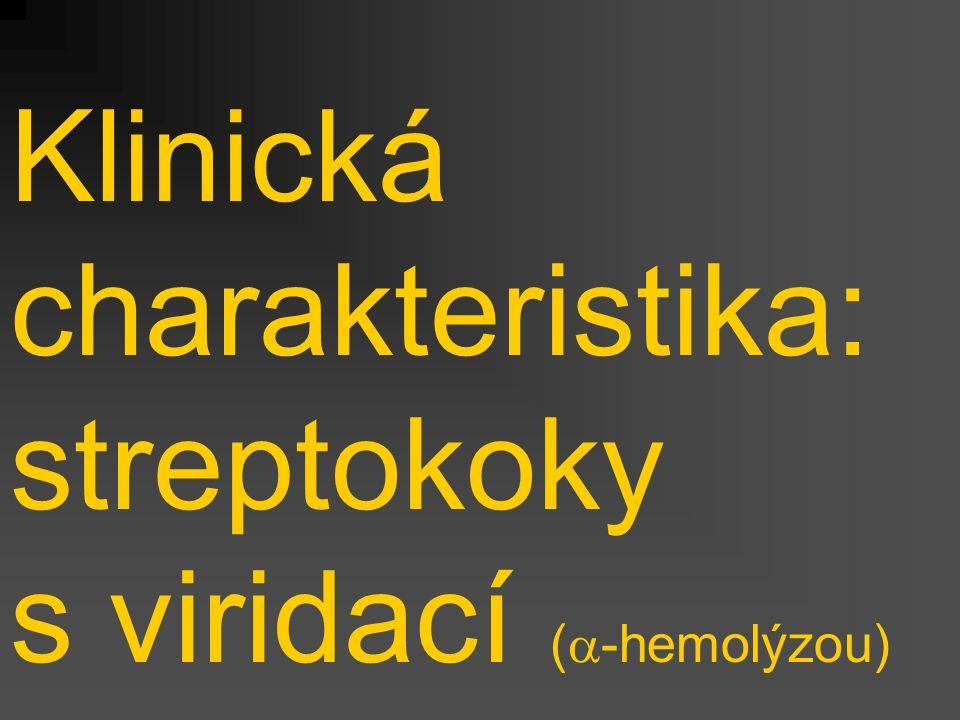 Klinická charakteristika: streptokoky s viridací (a-hemolýzou)