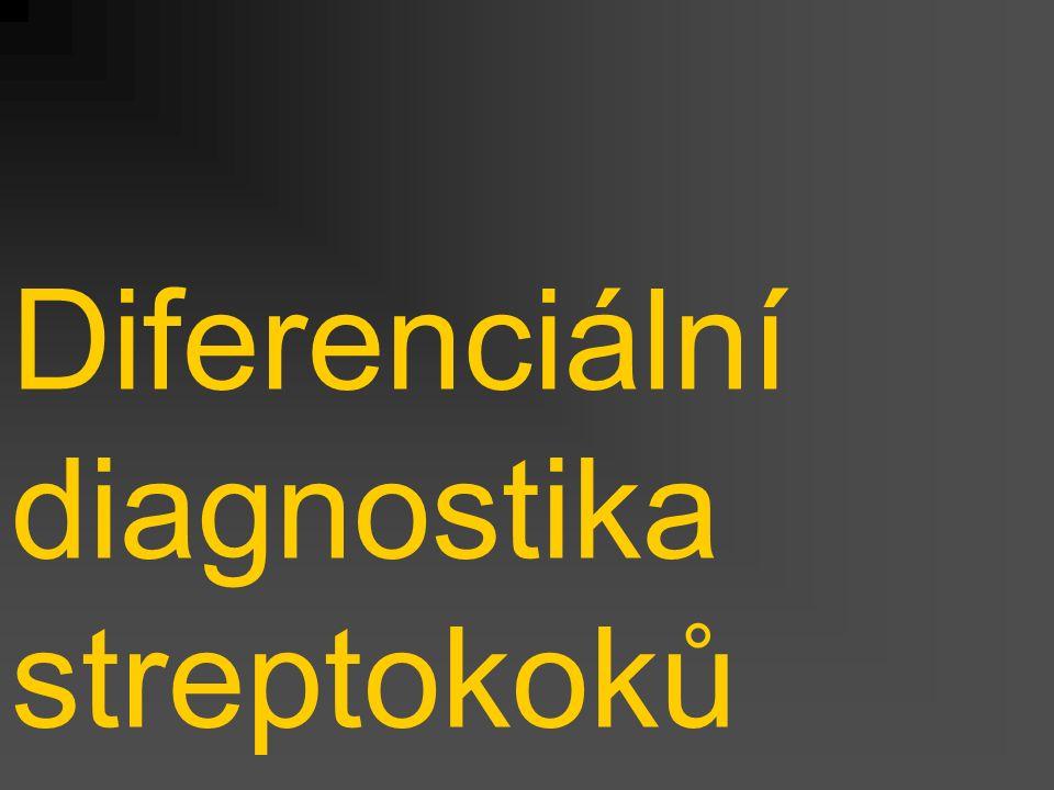 Diferenciální diagnostika streptokoků