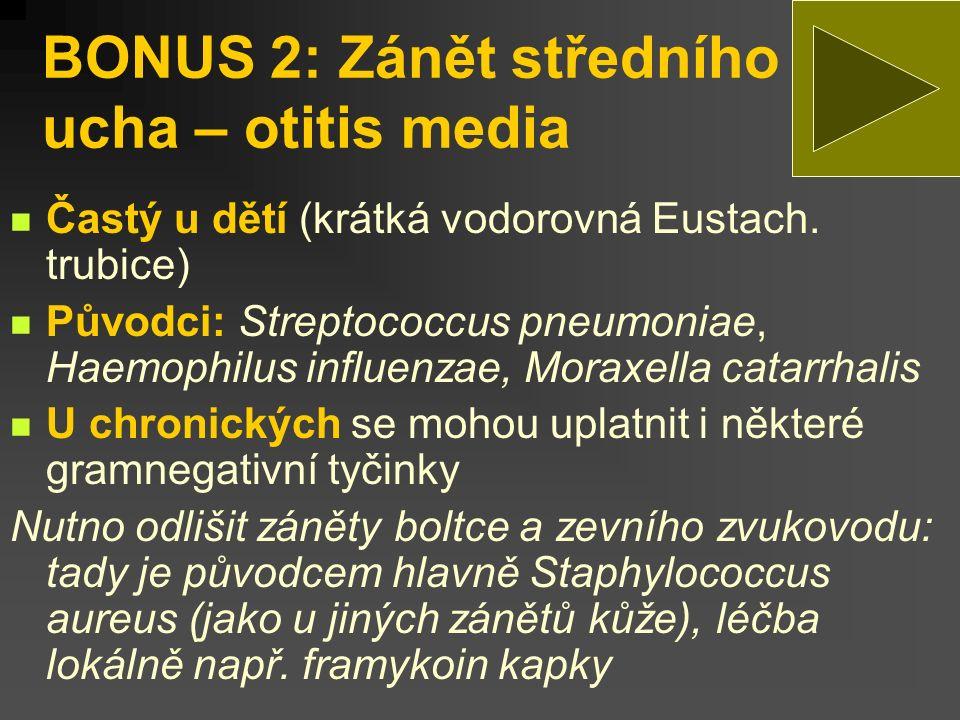 BONUS 2: Zánět středního ucha – otitis media