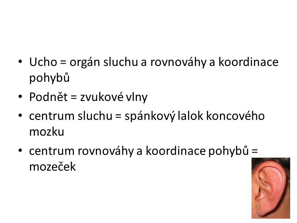 Ucho = orgán sluchu a rovnováhy a koordinace pohybů