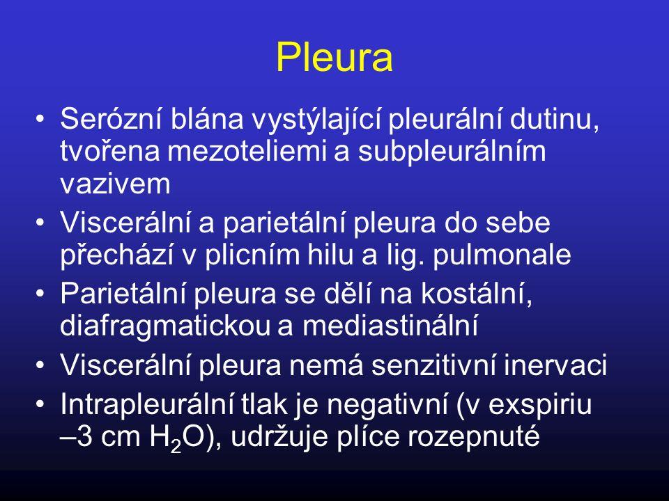 Pleura Serózní blána vystýlající pleurální dutinu, tvořena mezoteliemi a subpleurálním vazivem.