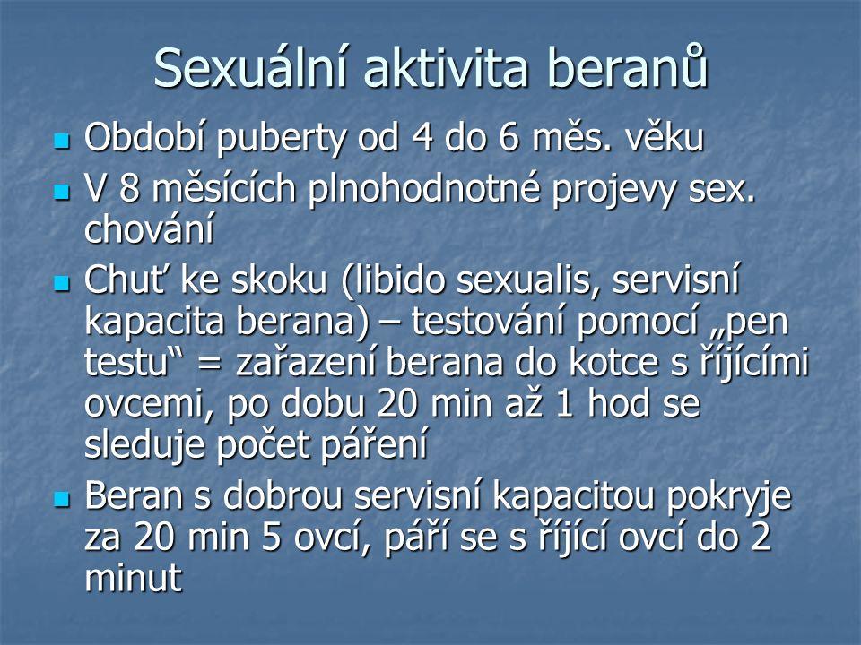 Sexuální aktivita beranů