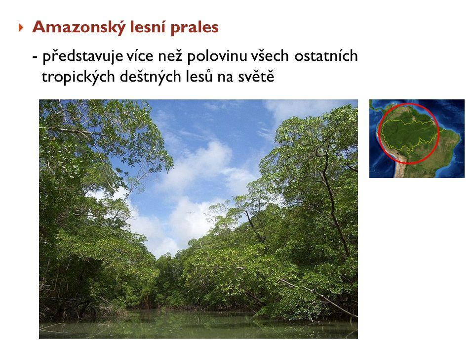 Amazonský lesní prales