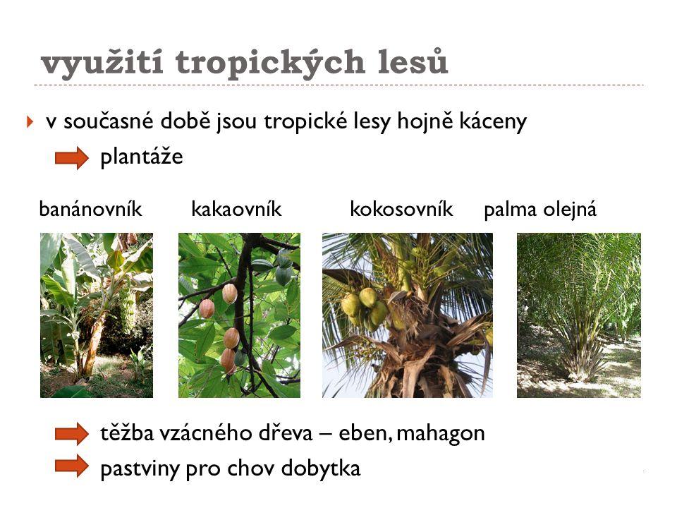 využití tropických lesů