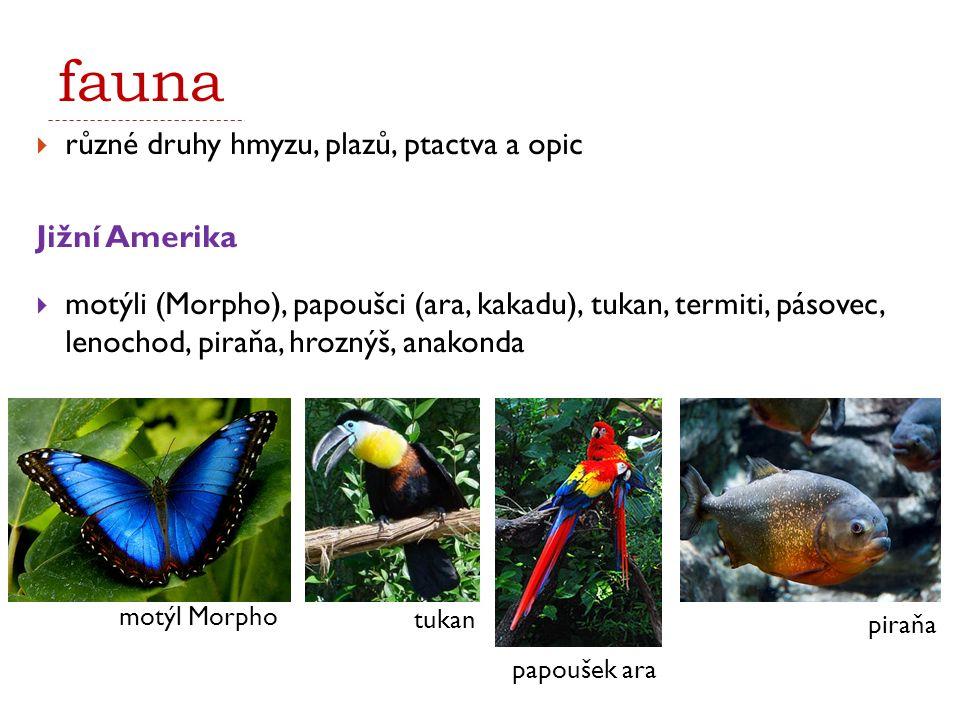 fauna různé druhy hmyzu, plazů, ptactva a opic Jižní Amerika