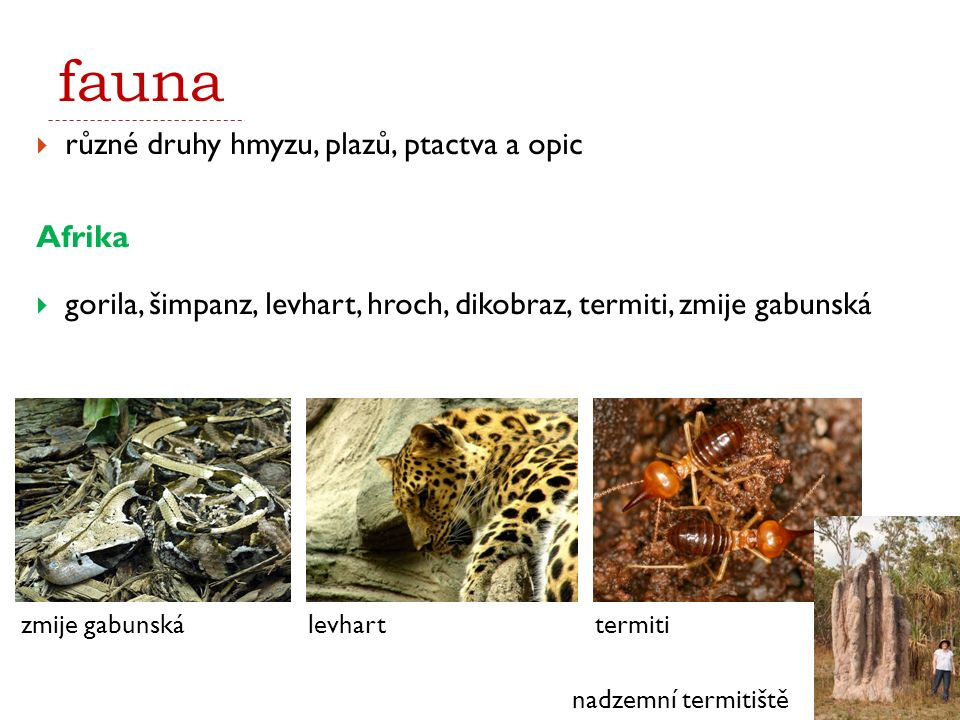 fauna různé druhy hmyzu, plazů, ptactva a opic Afrika