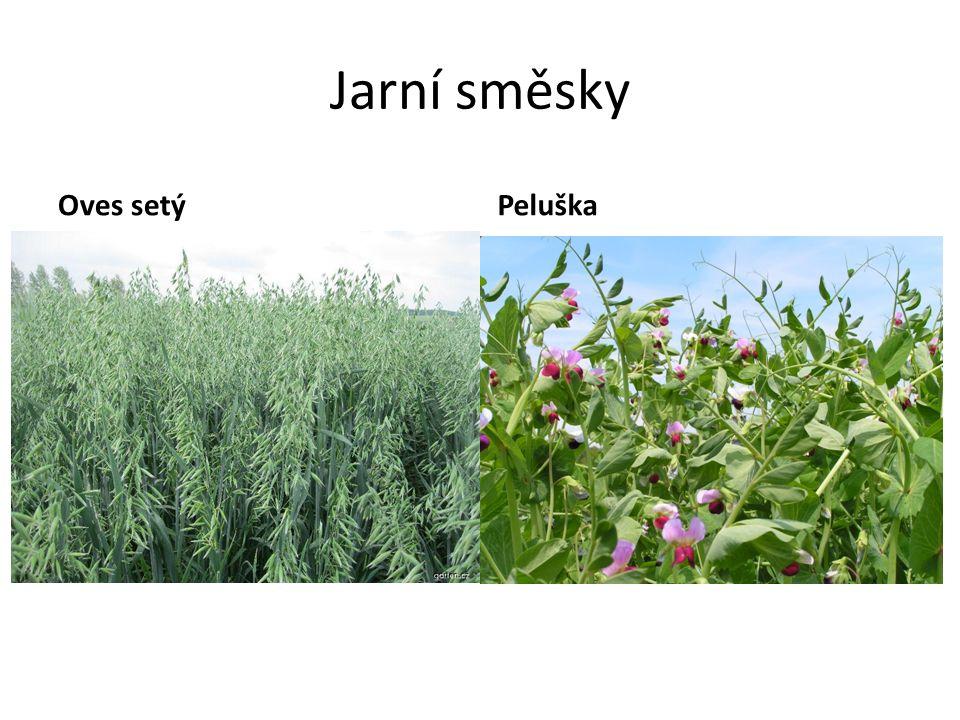 Jarní směsky Oves setý Peluška