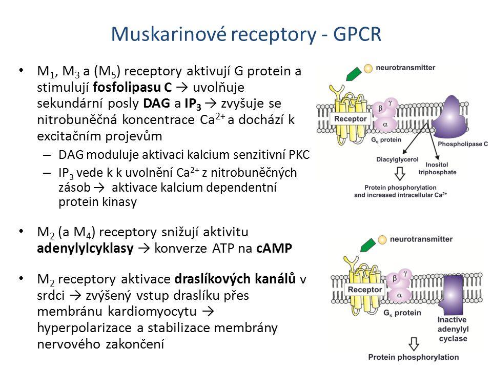 Muskarinové receptory - GPCR