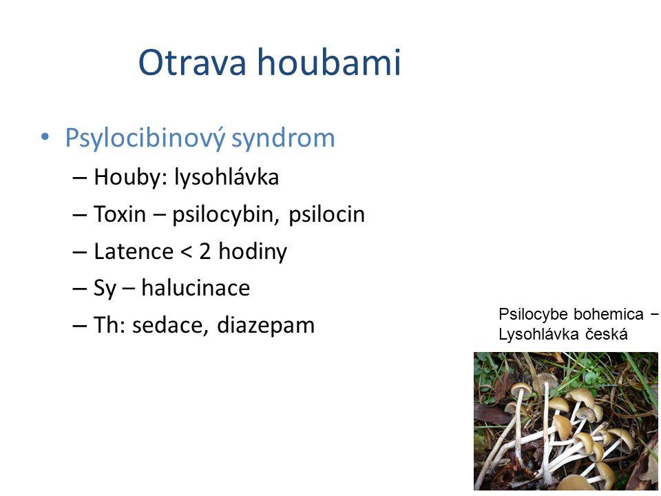 Otrava houbami Psylocibinový syndrom Houby: lysohlávka