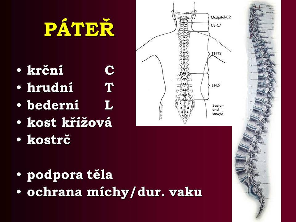 PÁTEŘ krční C hrudní T bederní L kost křížová kostrč podpora těla