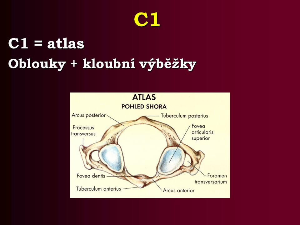 C1 C1 = atlas Oblouky + kloubní výběžky
