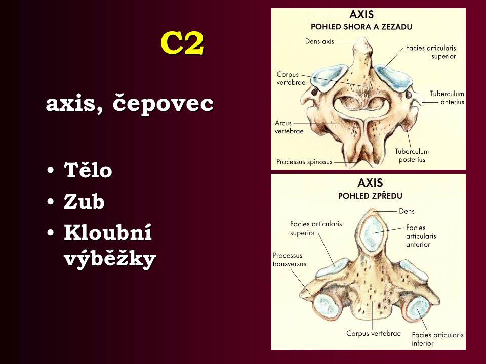 C2 axis, čepovec Tělo Zub Kloubní výběžky