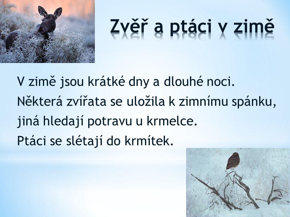 Zvěř a ptáci v zimě