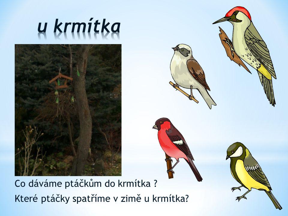 u krmítka Co dáváme ptáčkům do krmítka Které ptáčky spatříme v zimě u krmítka