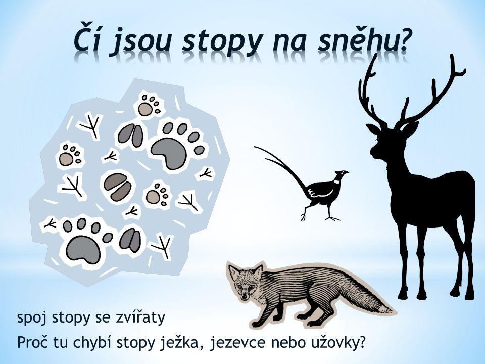 Čí jsou stopy na sněhu spoj stopy se zvířaty Proč tu chybí stopy ježka, jezevce nebo užovky