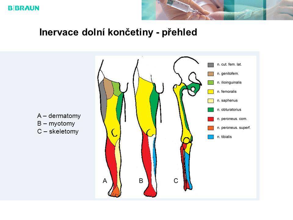 Inervace dolní končetiny - přehled