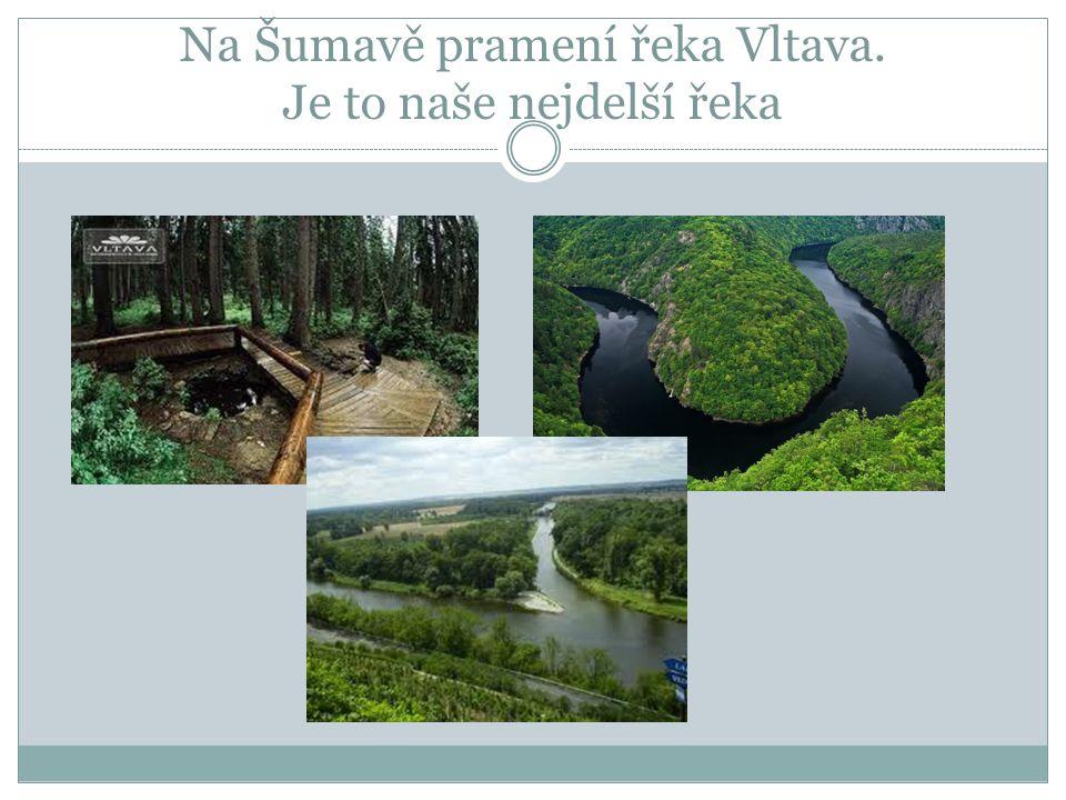 Na Šumavě pramení řeka Vltava. Je to naše nejdelší řeka