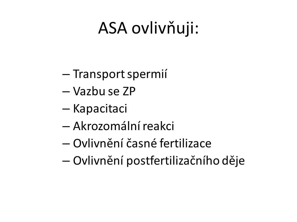 ASA ovlivňuji: Transport spermií Vazbu se ZP Kapacitaci