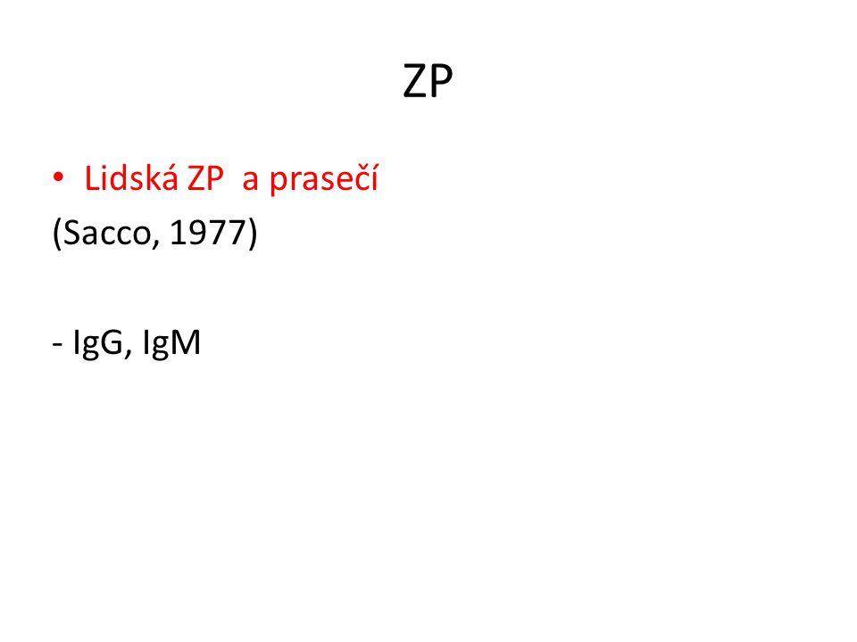 ZP Lidská ZP a prasečí (Sacco, 1977) - IgG, IgM