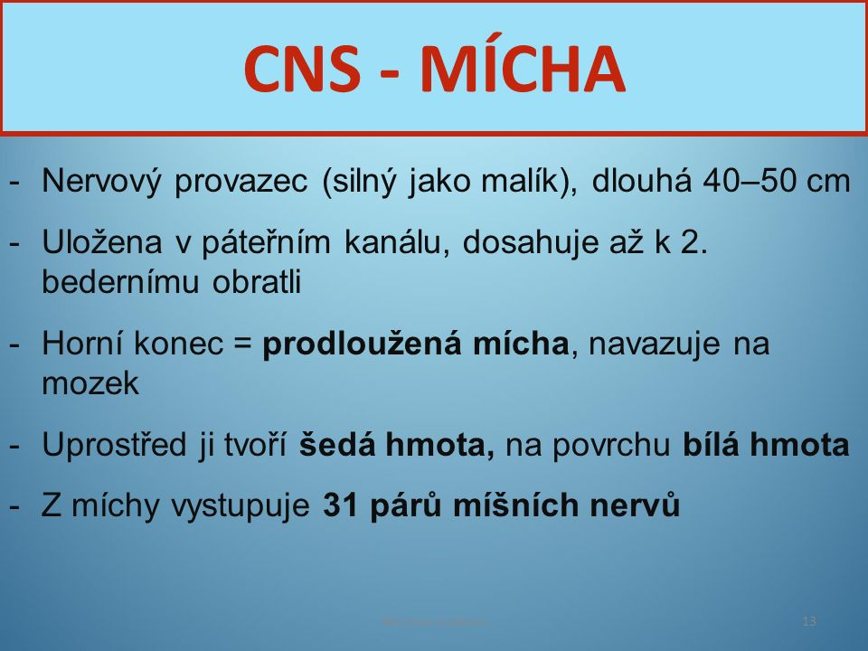 CNS - MÍCHA Nervový provazec (silný jako malík), dlouhá 40–50 cm