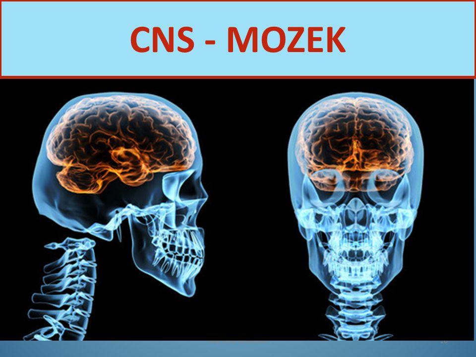 CNS - MOZEK Nervová soustava