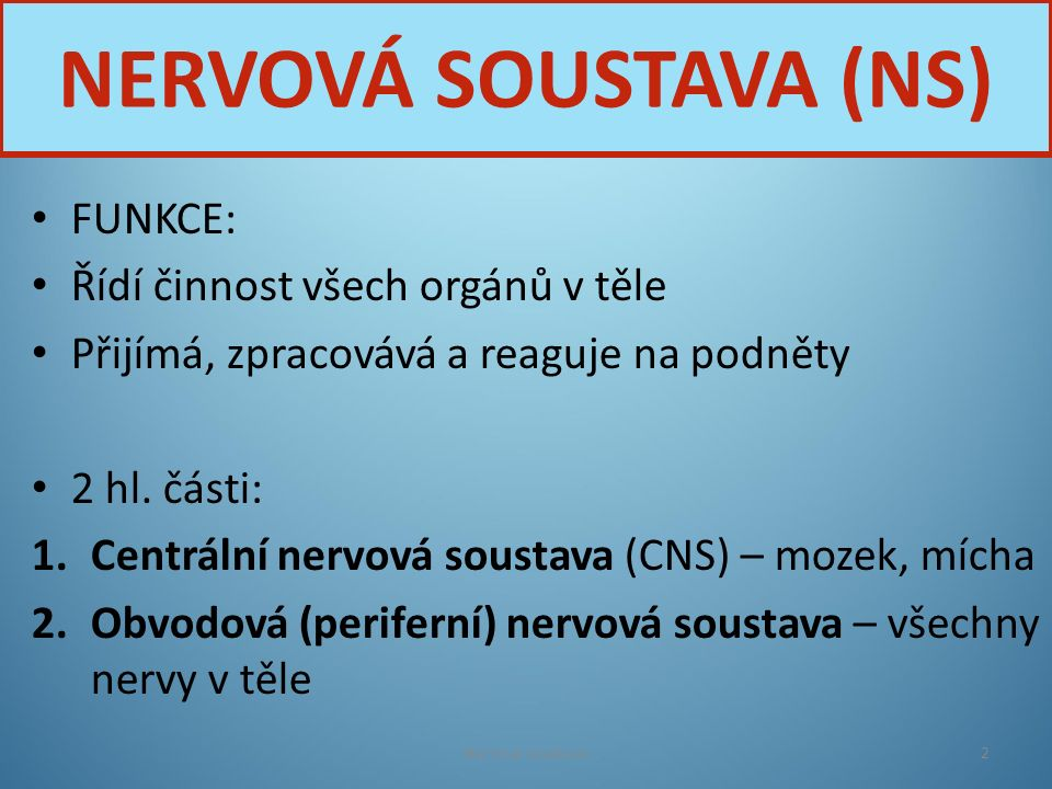 NERVOVÁ SOUSTAVA (NS) FUNKCE: Řídí činnost všech orgánů v těle