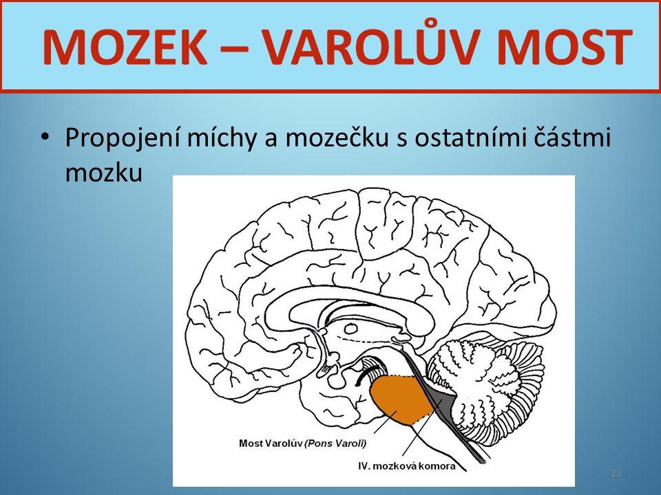 MOZEK – VAROLŮV MOST Propojení míchy a mozečku s ostatními částmi mozku Nervová soustava
