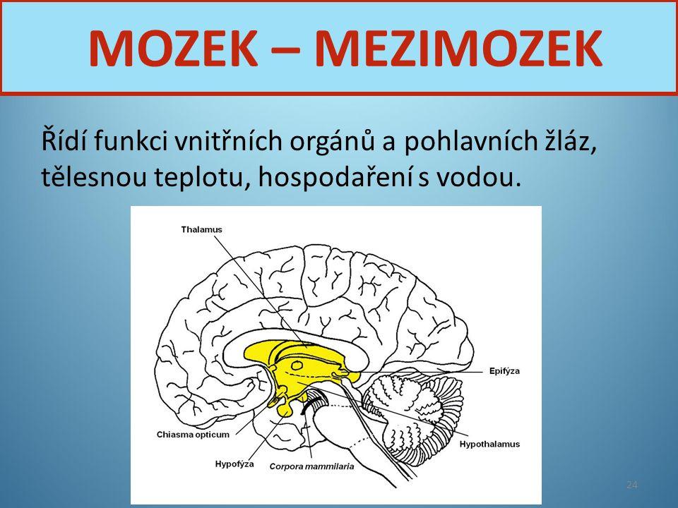 MOZEK – MEZIMOZEK Řídí funkci vnitřních orgánů a pohlavních žláz, tělesnou teplotu, hospodaření s vodou.