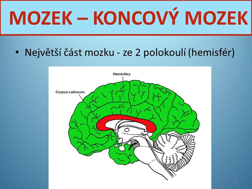 MOZEK – KONCOVÝ MOZEK Největší část mozku - ze 2 polokoulí (hemisfér)