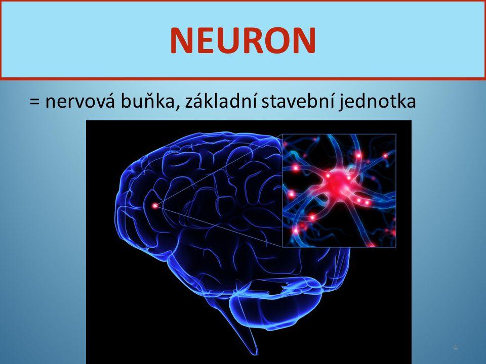 NEURON = nervová buňka, základní stavební jednotka Nervová soustava