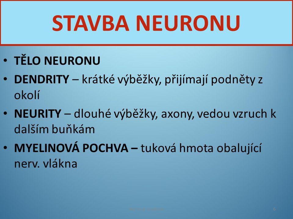 STAVBA NEURONU TĚLO NEURONU