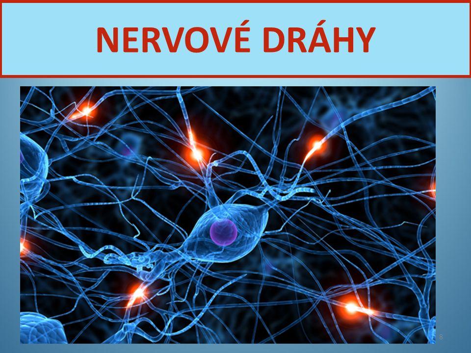 NERVOVÉ DRÁHY Nervová soustava