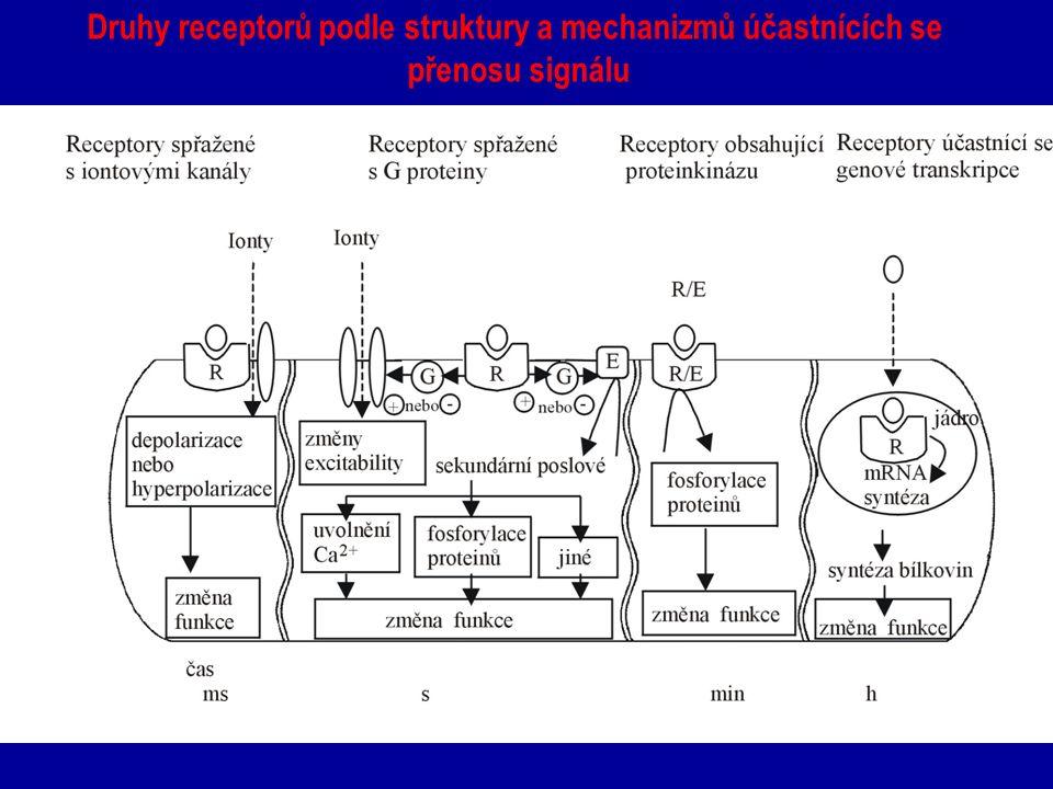 Druhy receptorů podle struktury a mechanizmů účastnících se