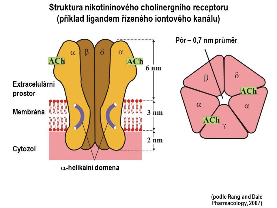 Struktura nikotininového cholinergního receptoru