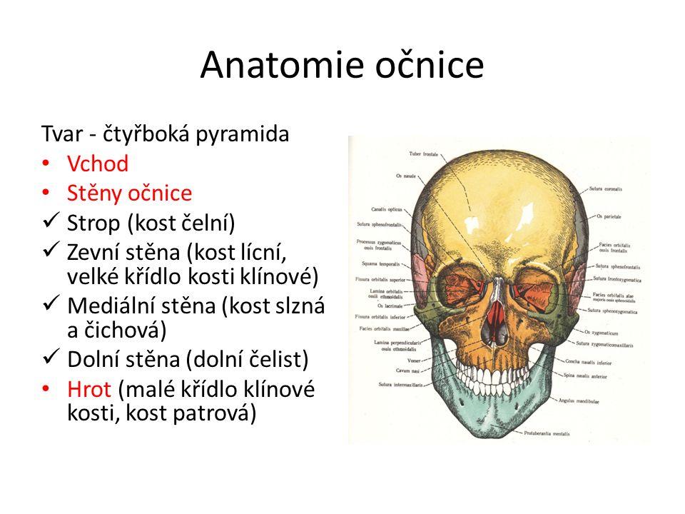 Anatomie očnice Tvar - čtyřboká pyramida Vchod Stěny očnice