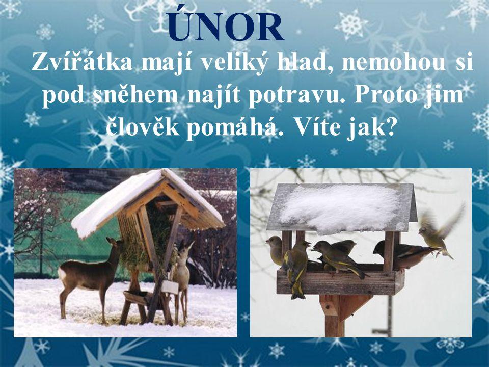 ÚNOR Zvířátka mají veliký hlad, nemohou si pod sněhem najít potravu.