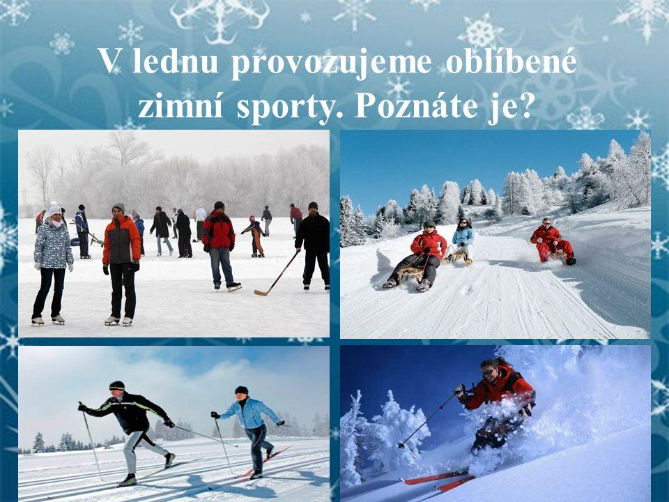V lednu provozujeme oblíbené zimní sporty. Poznáte je