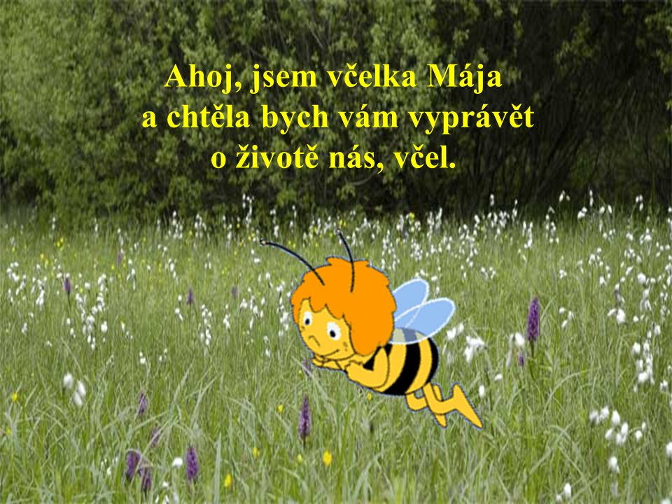 a chtěla bych vám vyprávět o životě nás, včel.